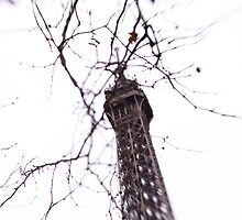 Eiffel Tower Tree Branches by Tobin Rogers