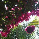 Brilliant Bougainvillea! by Pat Yager