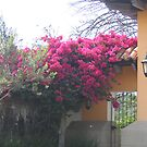 Hot Pink Entryway by Pat Yager