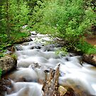 Mountain Stream by Gregory Ballos | gregoryballosphoto.com