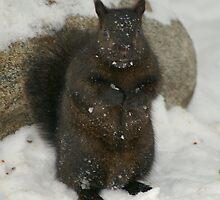 Snow Squirrel.................. by Larry Llewellyn