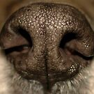 Dog Nose by Franco De Luca Calce