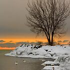 Swan Lake by Chiller