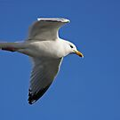 Gliding Along by Robert Abraham
