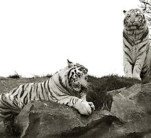 Tigers Lunch by LisaRoberts