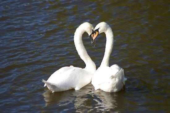 Love Birds by RCrabb