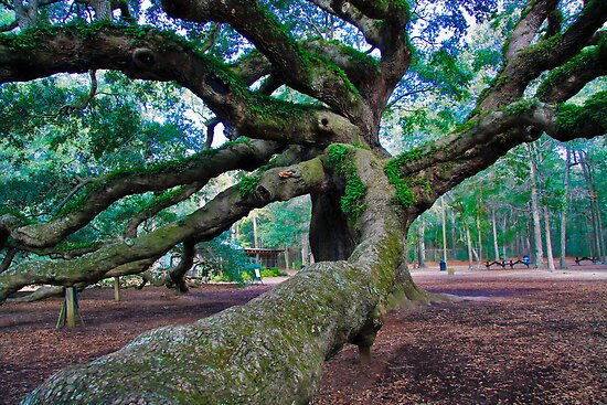 Angel Oak II by AngelPhotozzz
