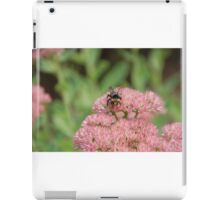 Bee Pollinating Sedum iPad Case/Skin