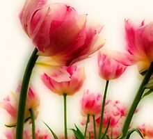 Pink Tulips for Mom by ienemien