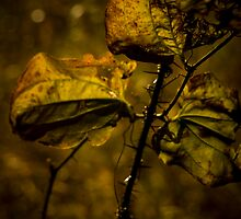 DYING THORNS by jeremy charbonneau