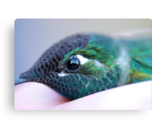 Eye of a Hummingbird Canvas Print