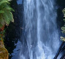 first creek falls errinundra plateau 1 by dave whyte