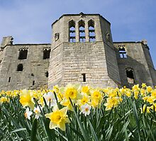 Warkworth Castle and Daffodils by moorhen