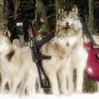 The Wolves by Leonard  Zinovyev