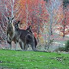 Autumn Roos  by mspfoto