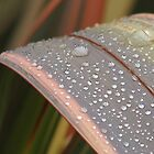 Dew on Flax Leaf, Mannum South Australia by Catherine Clemow
