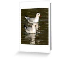 Seagulls #3 Greeting Card