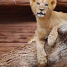 5 Month old Cub by SolomomSC
