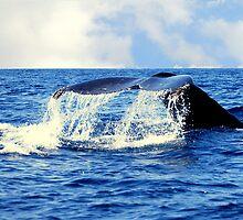 A Whales Tail...  by LjMaxx