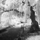 Infrared Tree by Ann Garrett