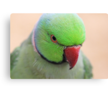 Indian Ring neck Parrot Canvas Print