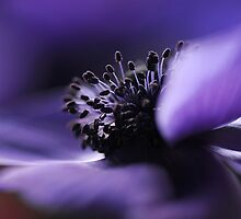 Deep purple by Jacky Parker
