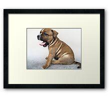 Staffordshire Bull Terrier Puppy Dog, Modern Art Print Framed Print