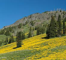 Hillside with Flowers. by William Fehr