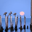 Pelicans at Moonset by Charlie Sawyer