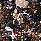 Beached Starfish  by Billlee