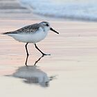 Sanderling by Lucy Hollis