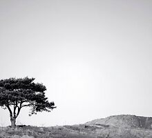 Solitary Tree by Victoria Kidgell