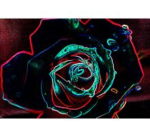 Rose in Glow Photographic Print