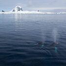 Humpbacks blowing by David Burren