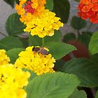 Lovely Lantana by justbyjulie
