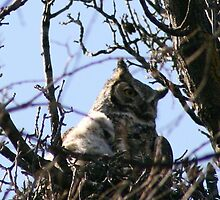 GREAT HORNED OWL AND BABY by Larry Trupp