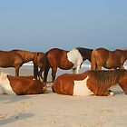 Horses On The Beach by Jesse Simmers