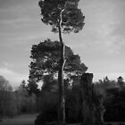 Sidelit Tree at Haddo House by Gordon Brebner