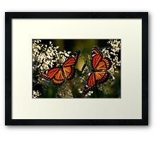 Pair of Viceroys Framed Print