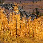 Autumn in the Yukon by Istvan Hernadi