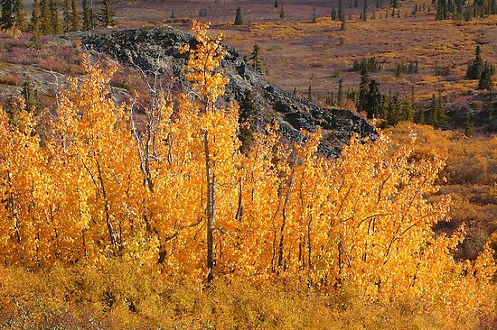 Autumn in the Yukon by Istvan Hernadi