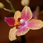 Bright Orchid by lizh467