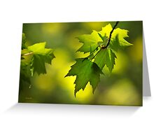 Sunlit Maple Leaves Greeting Card