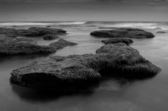 Black Seaweed by deannedaffy