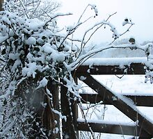 Snowy gate by LisaRoberts