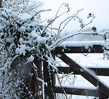 Snowy gate by LisaRoberts