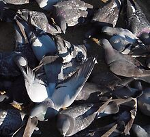 Mass of Pigeons by Tama Blough
