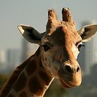 City Dwelling Giraffe by Kezzarama