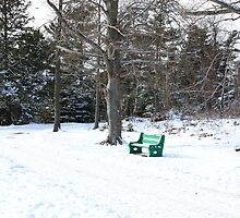 Park Bench In Winter by HALIFAXPHOTO