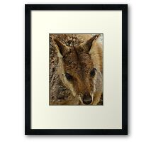 Up Close with a Wild Rock Wallaby Framed Print